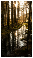 Afternoon light in the woods (S.R.Murphy) Tags: scotland bridgeoforchy nature landscape sunshine woodland