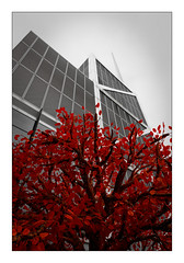 London's buildings...Red tree (Jean-Louis DUMAS) Tags: architecture chicago lignes géométrique abstrait architecte architect abstract abstraction art artist artiste artistique bw building bâtiment nb noiretblanc black white noir photos noireblanc blanc tour tower maniac noretblanc vertige blackandwhite blackwhite blackwhitephotos noirblanc rouge red monochrome arbre tree london londres