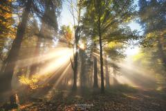 Precious Light (Andy Brandl (PhotonMix)) Tags: landscape forest trees sunrays photonmix autumn misty growth landschaftsaufnahme germany