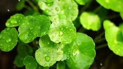 Le prove richiedono fede (eshao5721) Tags: lachiesadidioonnipotente lodeadio laverità laparoladidio lavocedidio vangelo testimonianze amoredidio salvezzadidio dioonnipotente verde