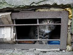 Feline258 (Feliform) Tags: cat cats tomcat stray homeless