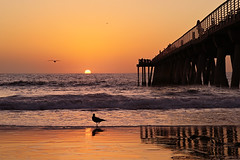 Watch the Sun Go Down (lfeng1014) Tags: watchthesungo hermosabeachpier hermosabeach lasangeles california usa seagull birds sunset pacificocean ocean beach reflection waves landscape canon5dmarkiii ef2470mmf28liiusm travel lifeng