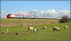 Pendolino, Bugbrooke (Jason 87030) Tags: wcml bugbrooke northants field grazing sunny shot virgin vermin didlo portaloo pendolino uk train tren 20007 wool baaaa baaa baa frame border composition