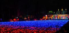 Lichtermeer (UlvargHS) Tags: christmasgarden dresden schlosspillnitz schloss lichter weihnacht beleuchtung ausflug olympus olympusomdem10ii ulvarg affinityphoto