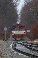810.600 s Sp 1981 (Pácal Roman) Tags: czsk railway train diesel trees