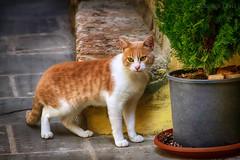 l'amicizia di un gatto -the friendship of a cat (Eugenio GV Costa) Tags: approvato gatto gatti cat cats animal animali domesrici