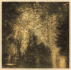 Kingdom of Leaves (LowerDarnley) Tags: washi paper goldleaf print alternativeprocess alternativedigitalprint woods leaves trees water