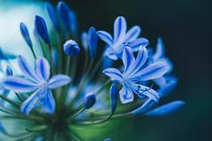 Just blue... (R✿an ℉✿urie) Tags: hss slidersunday postprocessedtothemax sliderssunday blue dreams