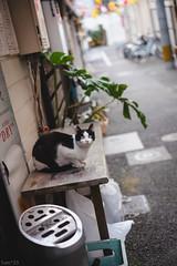 猫 (fumi*23) Tags: ilce7rm3 sony street sel55f18z sonnar sonnartfe55mmf18za a7r3 animal alley emount 55mm cat chat gato neko ねこ 猫 ソニー 路地 bokeh dof