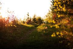 Sommerabend (Bugtris) Tags: landschaft sunset perspective gibelegg abend canon 5dmkiii sommer 85mm12iilcanon