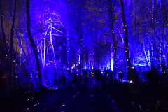 Light/Colours Fairy-tale in Antwerpen (José D...) Tags: puttekewinter deschorre recreatiedomein provinviaalrecreatiedomein belgië lightfestival lichtfestival vividstriking nightlightcolours itwasblue blueinthedark