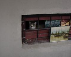 Feline257 (Feliform) Tags: cat cats tomcat stray homeless
