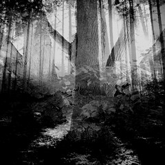 Fantasy wood collage photo (romizaj) Tags: picture collage wallpaper bakground fineart art arte artcollector tree trees wood landscape bw monochrome dark fantasy magic nature natural organic plant leaf leaves