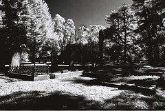 Cemetery (goodfella2459) Tags: nikonf4 afnikkor24mmf28dlens rolleiinfrared400 35mm blackandwhite film analog cemetery graves trees grass southernhighlands newsouthwales filters hoyainfraredr72filter filter hoya lensfiltersgroup bwfp