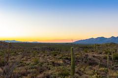 DSC_3370 (farajalhattab) Tags: arizona tucson cactus sunset nikon d7200 landscape mountain