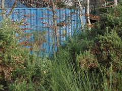 Hiding (BurnThePlans) Tags: container blue overgrown hidden forest woods trees