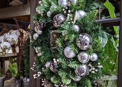 Christmas Wreath Selfie with Benni (Bennilover) Tags: christmas wreath ornaments silver firs fir selfie benni collar camera