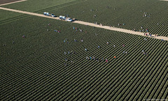 Farm workers picking crops near Salinas, California (Michael Layefsky) Tags: famworkers agriculture fields crops picking aerial photograph salinas california