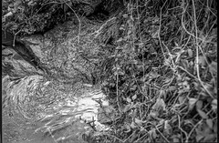 looking down, stream, Craggy Park, West Asheville, NC, Minolta XG-M, Super Albinon 28mm f/2.8, Derev Pan 400, HC-110 developer, 12.14.19 (steve aimone) Tags: lookingdown stream creek communityparkatcraggypark craggypark westasheville northcarolina minoltaxgm superalbinon28mmf28 primelens derevpan400 hc110developer 35mm 35mmfilm film monochrome monochromatic blackandwhite landscape