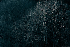 Branches (Martin Hewer) Tags: winter trees branches martin hewer photographer henbury bristol