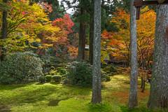 secret garden (FollowingNature (Yao Liu)) Tags: 三千院 sanzenintemple fallcolors fallfoliage 京都 日本 followingnature