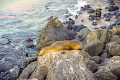 Just having a Dose (Tony.Brasier) Tags: water sky lovely location fun flickr fantastic fishing nikond7200 sea lion