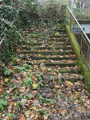 Stairway to … (mkorsakov) Tags: dortmund brünninghausen rombergpark blätter leaves laub treppe stairs moos moss bahnhof station tierpark