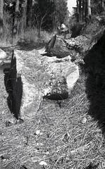Leica M3  Mt. Lemmon031 (Linus BK) Tags: delta m3 leica mountlemmon arizona trees ilford summicron