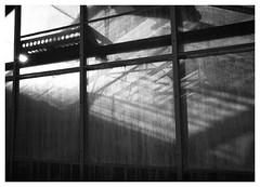 Greenhouse (Dave Button) Tags: blackandwhite bw fuji fujifilm xf23mmf2 xpro2 universityofnottingham mono acros monochrome border urban greenhouse glass light sunlight contrast clarity silverefexpro