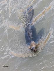 Hi! (therlo28) Tags: foca animal animals animales agua movimiento nature naturaleza zoo