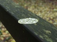 dröpje voor dröpje (mkorsakov) Tags: dortmund brünninghausen rombergpark blätter leaves laub zaun fence tropfen drops focus fokus minimal moos moss