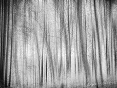 Dreaming in the Woods... (Ody on the mount) Tags: anlässe bäume em5iii experimente landschaft mzuiko124028 omd olympus pflanzen schönbuch wald wanderung bw forest icm landscape monochrome photoshop sw trees woods