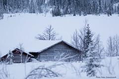 Barns! (petergranström) Tags: approved barns lador lake sjö snow snö trees träd shrubs buskar