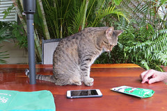 Key West Trip, November 11 to 20, 2019 3978Ri 4x6 (edgarandron - Busy!) Tags: florida keywest floridakeys cat cats kitty kitties tabby tabbies coco