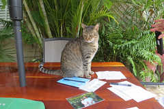 Key West Trip, November 11 to 20, 2019 3973Ri 4x6 (edgarandron - Busy!) Tags: florida keywest floridakeys cat cats kitty kitties tabby tabbies coco