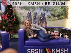 Belgian Kennel Club Dog Show Brussels (Bergbos) Tags: bouvier des flandres dog show brussels kmsh srsh belgian breed