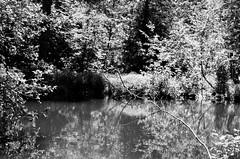 34790026 (onebellboy) Tags: wholerollproject wwwellsworthbellcom onebellboy fuji acros 100 nikonfe 50mmseriese thedarkroom blackandwhite maine summer montreal