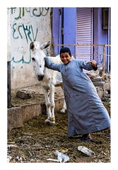 halte à Edfou (Marie Hacene) Tags: egypte esna enfant âne rue street