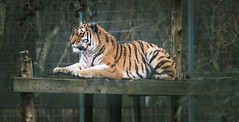 Photo of Sunday at the zoo-835