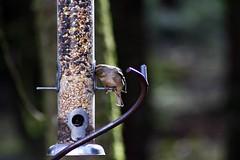 Vogel lecker (margit37) Tags: vogel vögel natur baum bäume