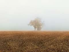 Tree in the Fog (Bephep2010) Tags: 2019 apple badenwuerttemberg badenwürttemberg deutschland feld germany herbst iphone iphone8plus landschaft nebel tiefenbronn autumn braun brown fall field fog landscape ländlich rural