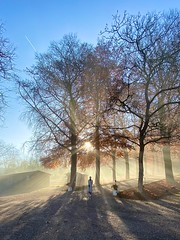 (LO.ST) Tags: sun trees tree light shadow sky green blue iphone