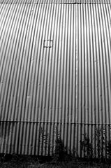 34790021 (onebellboy) Tags: wholerollproject wwwellsworthbellcom onebellboy fuji acros 100 nikonfe 50mmseriese thedarkroom blackandwhite maine summer montreal