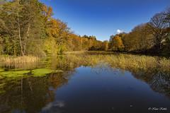 Mühlenteich - 30101902 (Klaus Kehrls) Tags: natur landschaft senn teiche mühlenteich sachsenwald herbst spiegelung