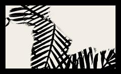 Zebra crossing (pastadimama) Tags: minimalism macroart zebra blackandwhite macro illusion abstract bw art macroabstract abstractart zebracrossing