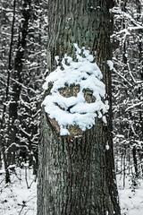 Papa Noël 😎 (tuvidaloca) Tags: humorous baum tree árbol wald humor humoristisch chistoso forest bosque tokinaatx280afpro2880mmf28aspherical nature pareidolie natur pareidolia humour humorístico naturaleza