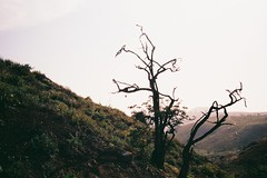 (Sovay83) Tags: konicahexaraf fujifilmsuperia100 35mm film expiredfilm lomasdelachay peru believeinfilm buyfilmnotmegapixels filmisnotdead filmisalive compactcamera