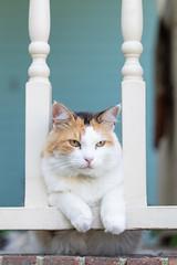 Coco kitty (Pamela Greer) Tags: cat cats