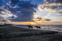 Riding into the sunset (agasfer) Tags: 2019 fiji vitulevu pentax k3 sigma1020 beach sunset cloudsstormssunsetssunrises people sand sea sky clouds horses nadi wailoaloa