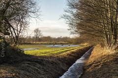 Emsland_Winter_DSC02607 (milanpaul) Tags: 2019 deutschland dezember emsland germany landscape landschaft lingen natur niedersachsen rehe sonydscrx100m2 winter